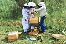 eco-responsable-ruches-apiculteur