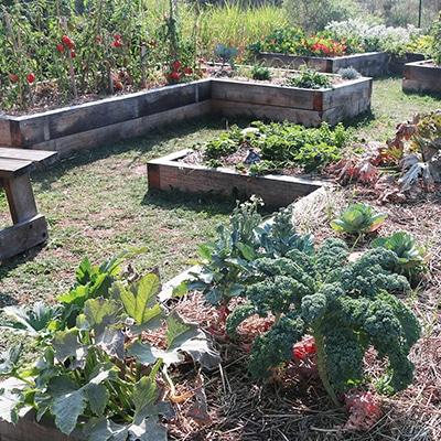 bacs-potager-legumes
